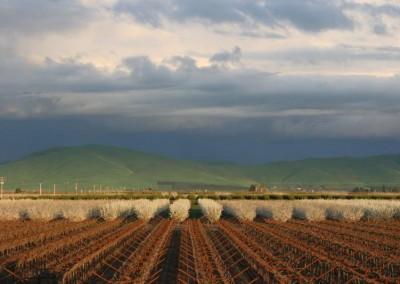 Vineyard shot before growing season